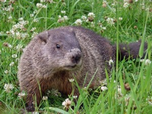 The Coyle Group Philadelphia Appraiser - Groundhog